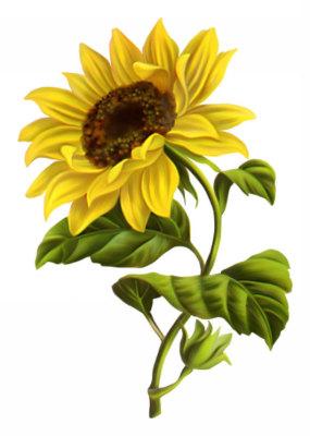 Sonshine Sunflower